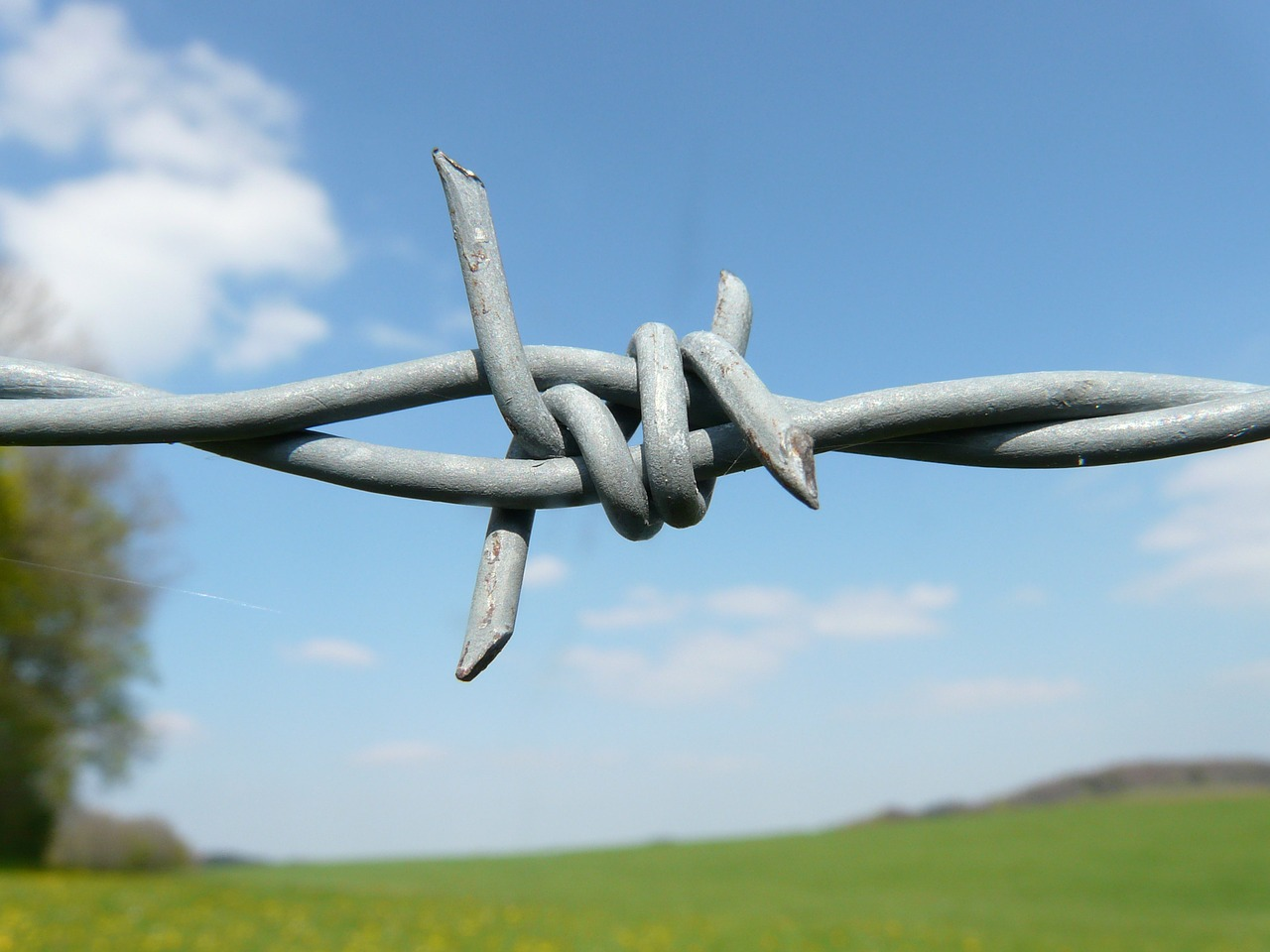 barbed wire fence barbed wire fence free photo