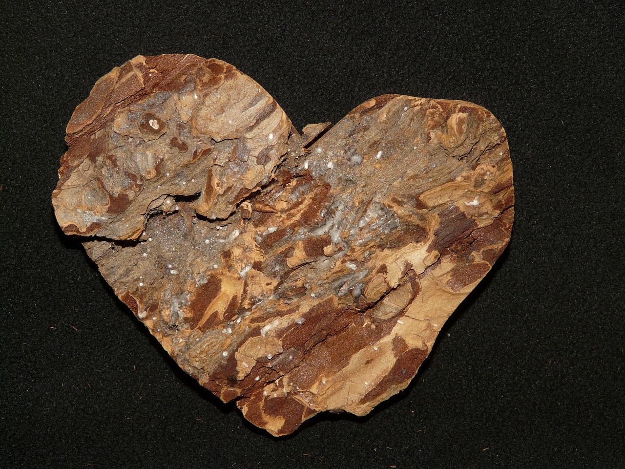 bark tree heart free photo