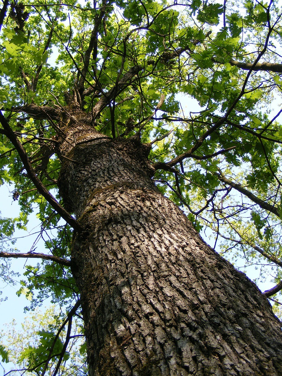 bark forest green free photo