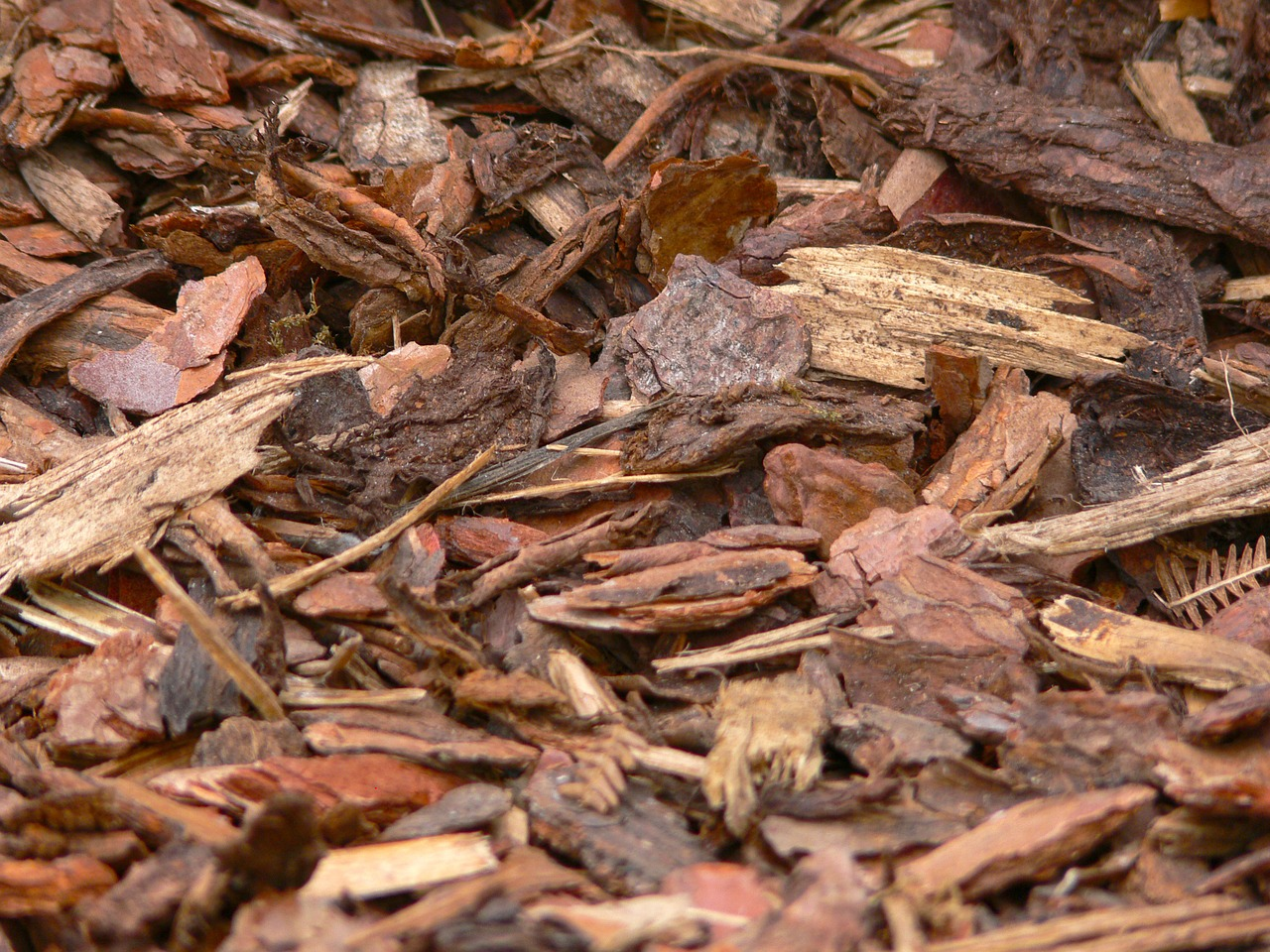 bark mulch wood snippets free photo