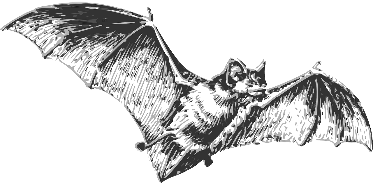 bat flying wings free photo