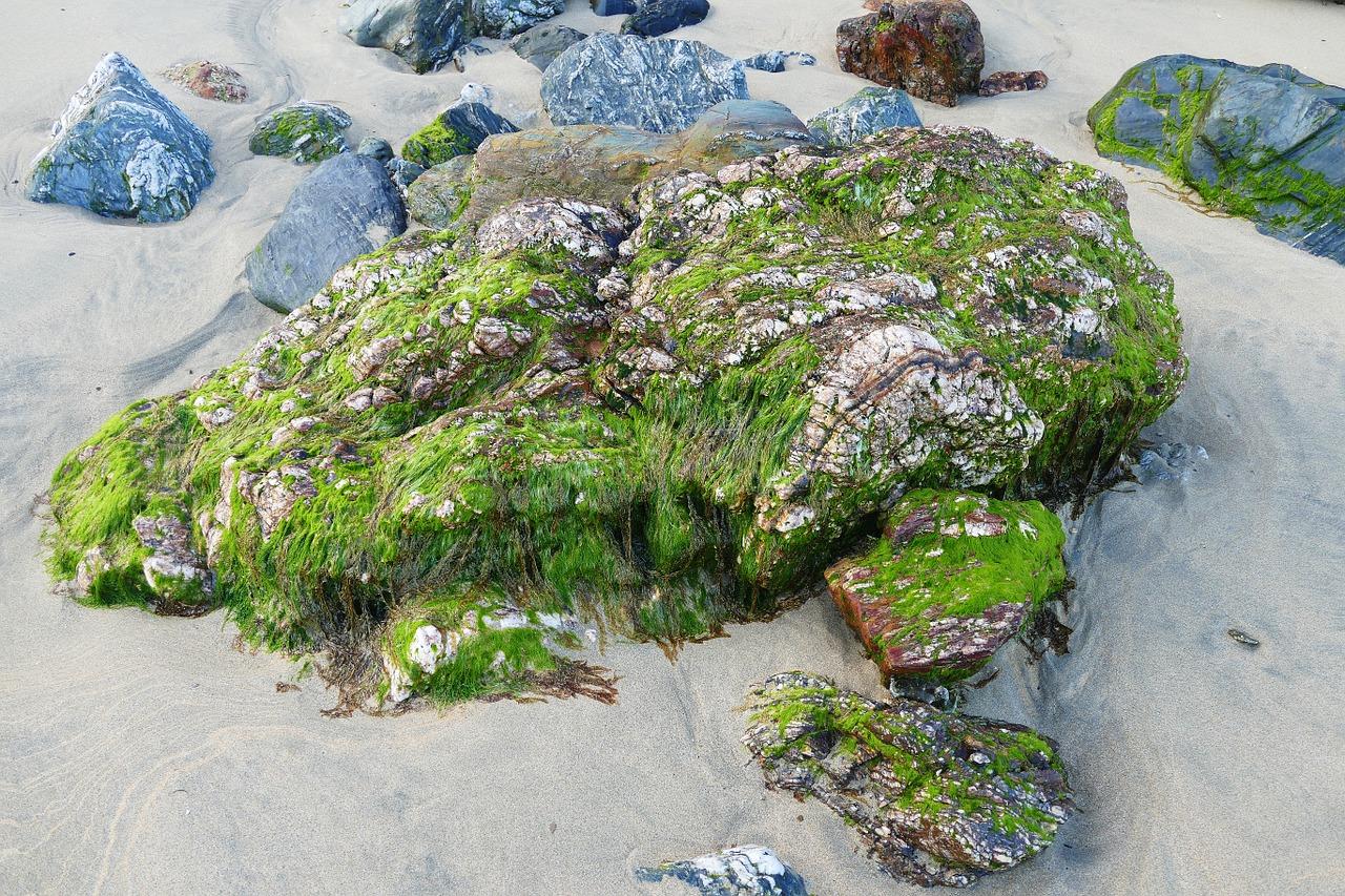 Картинка мох на камнях