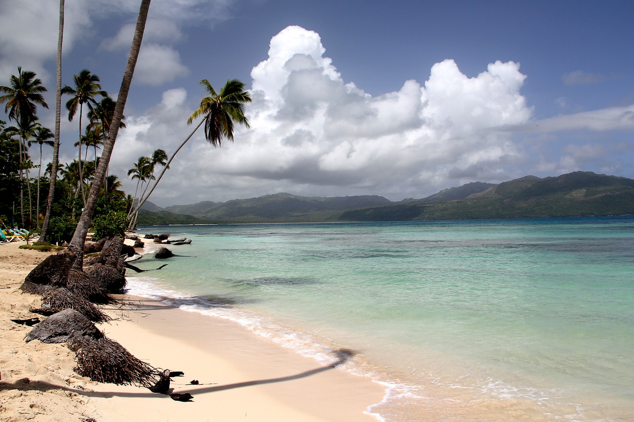 Image result for beach palm free