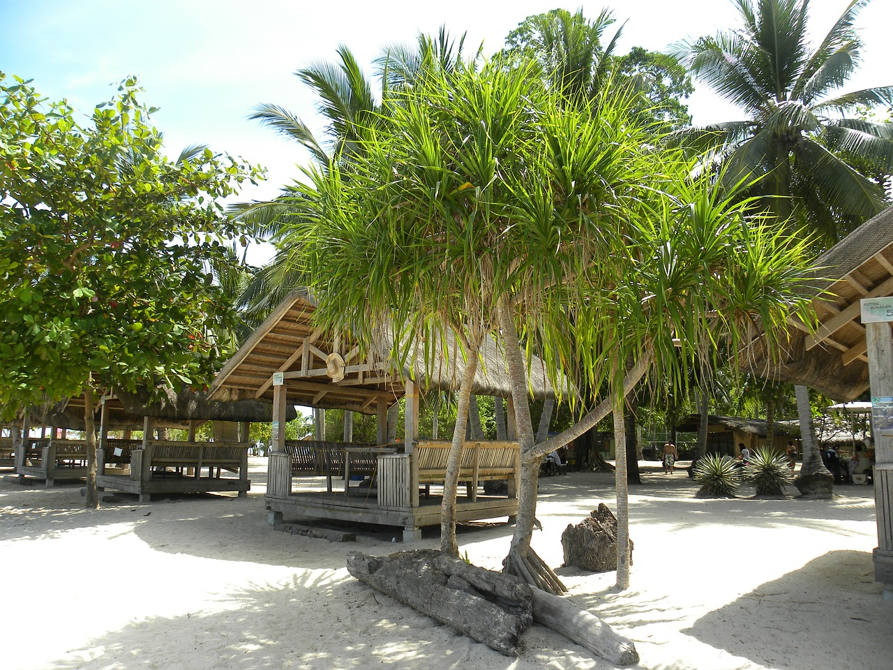 beach hut palm trees beach free photo