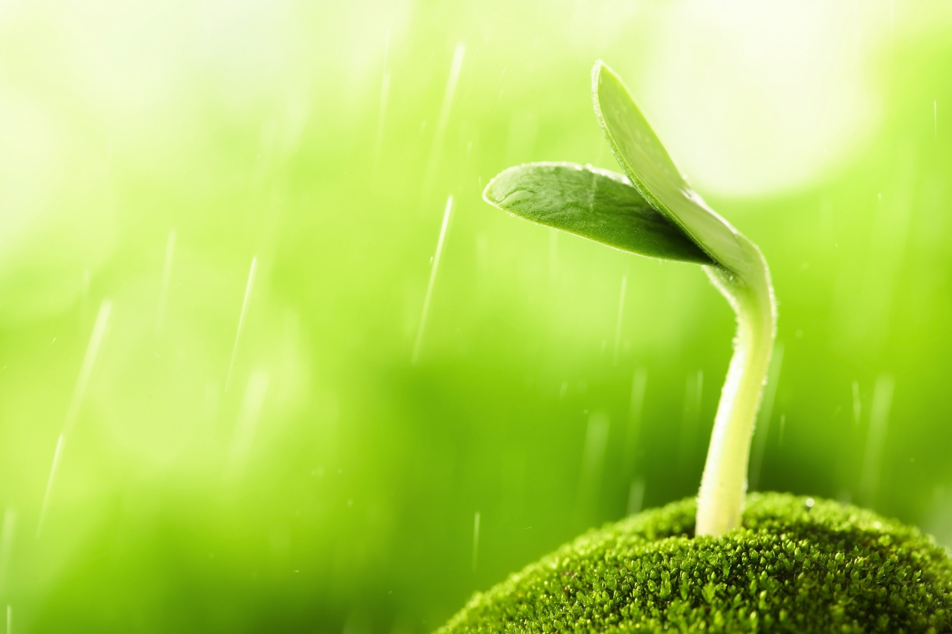 Bean sprout,plant,macro,close up,agriculture - free image from needpix.com