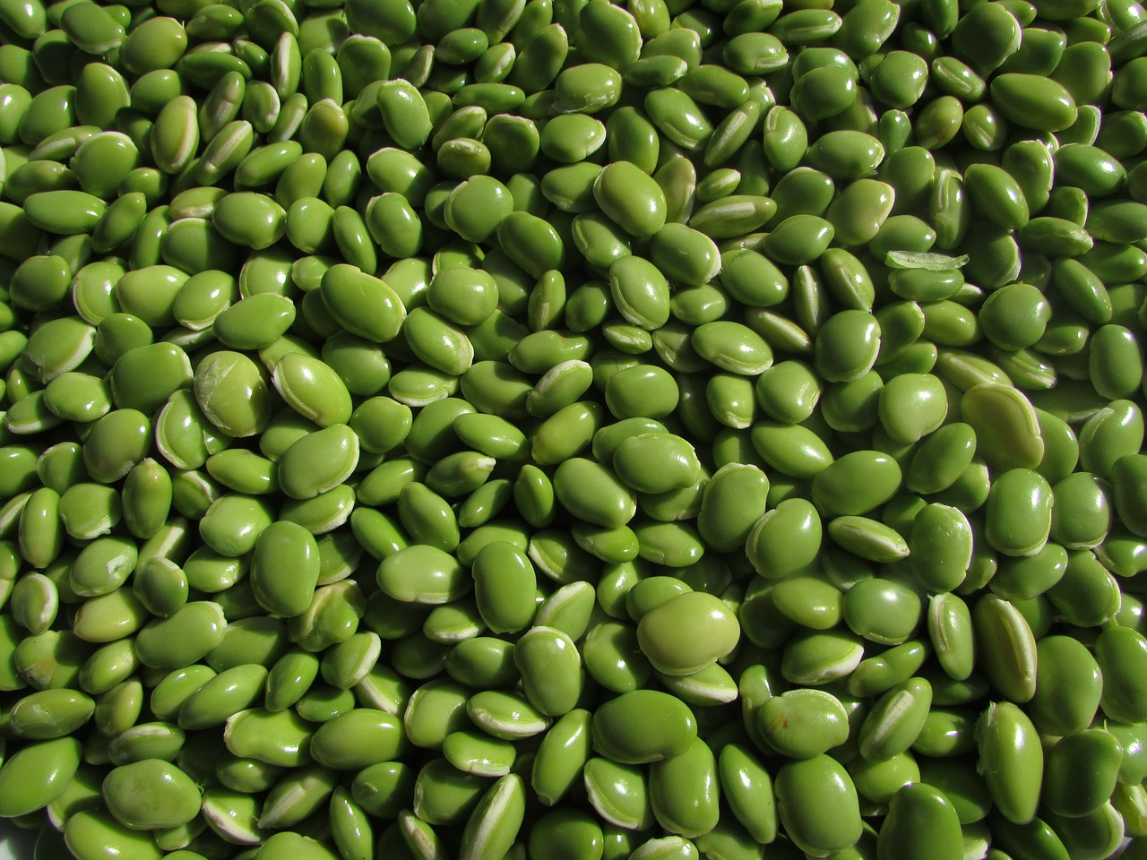 beans leguminous plants pulse free photo