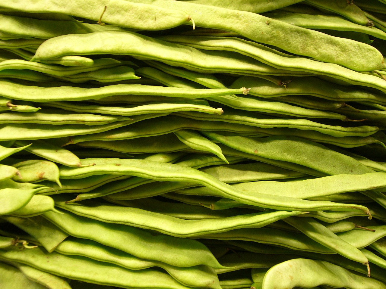 beans vegetables green free photo