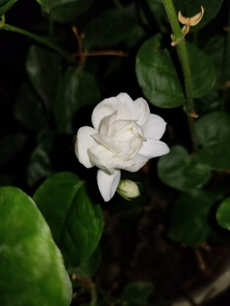 Beautifulflowerselegance Free Photo From Needpix