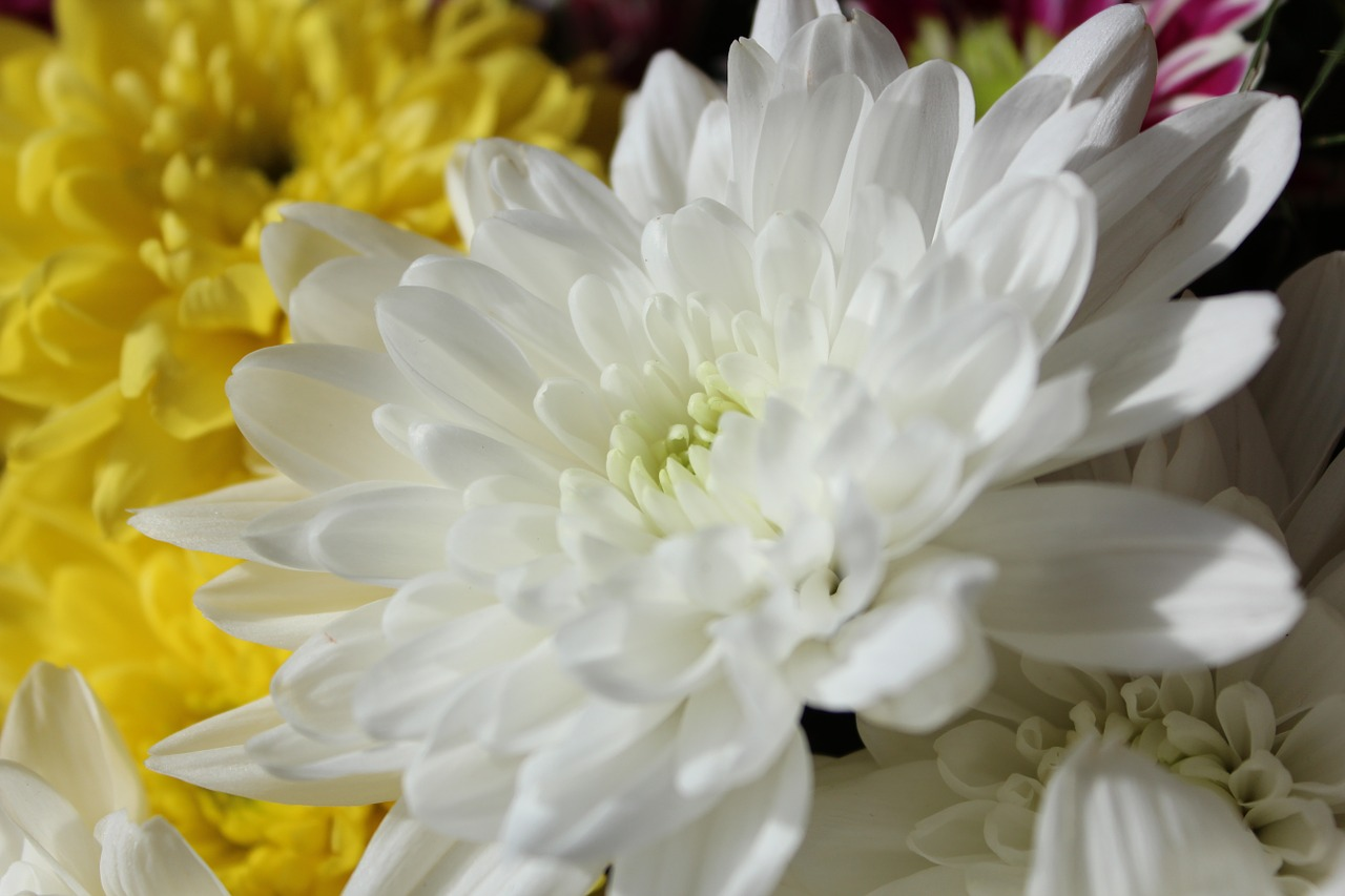 beautiful cheerful flowers free photo