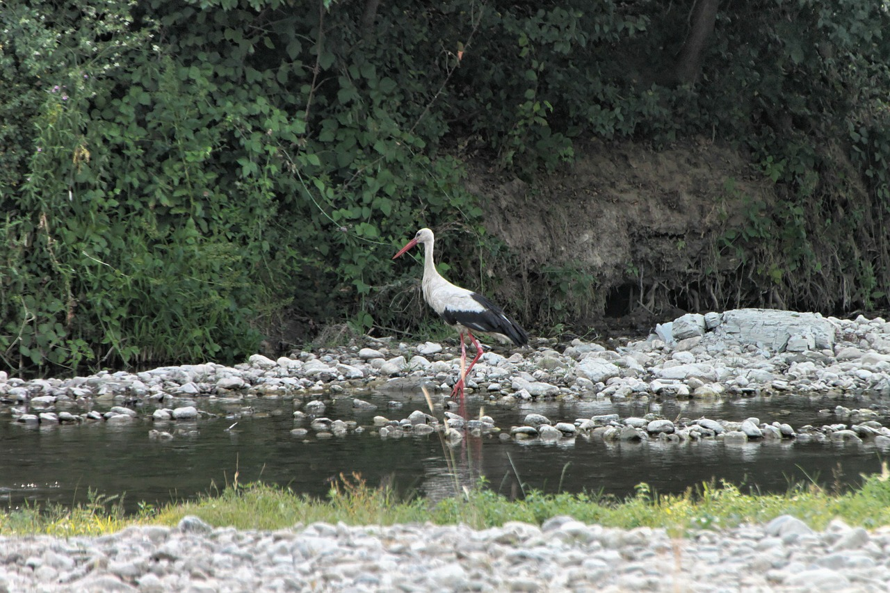 bed river stork free photo