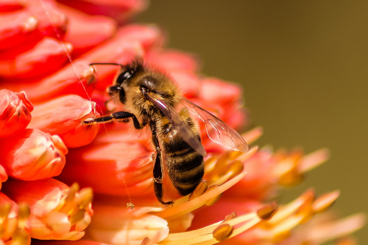 bee insect nature free photo