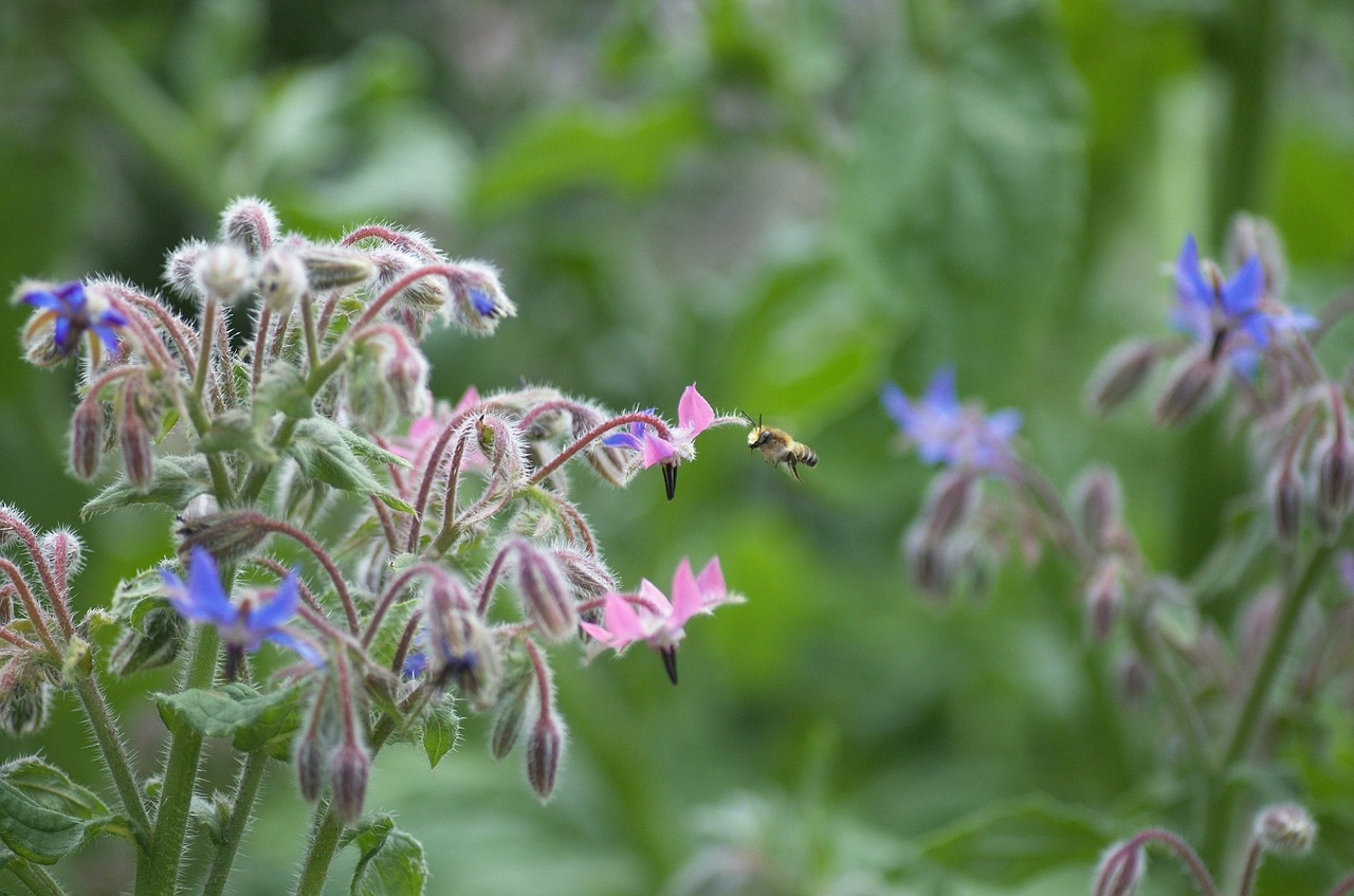 bee garden summer free photo