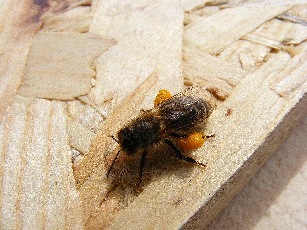bee dietary loaded free photo