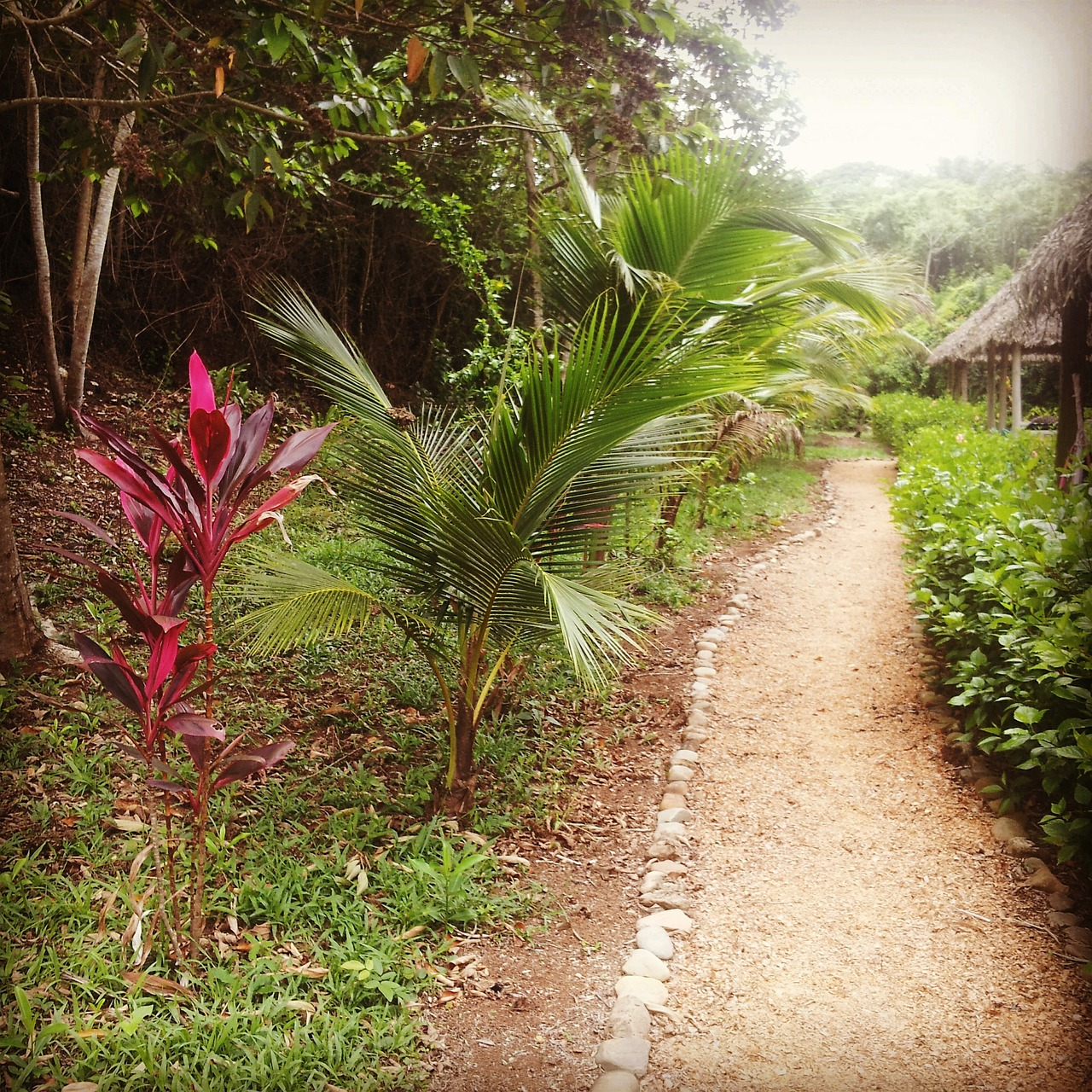 belize tropical resort free photo