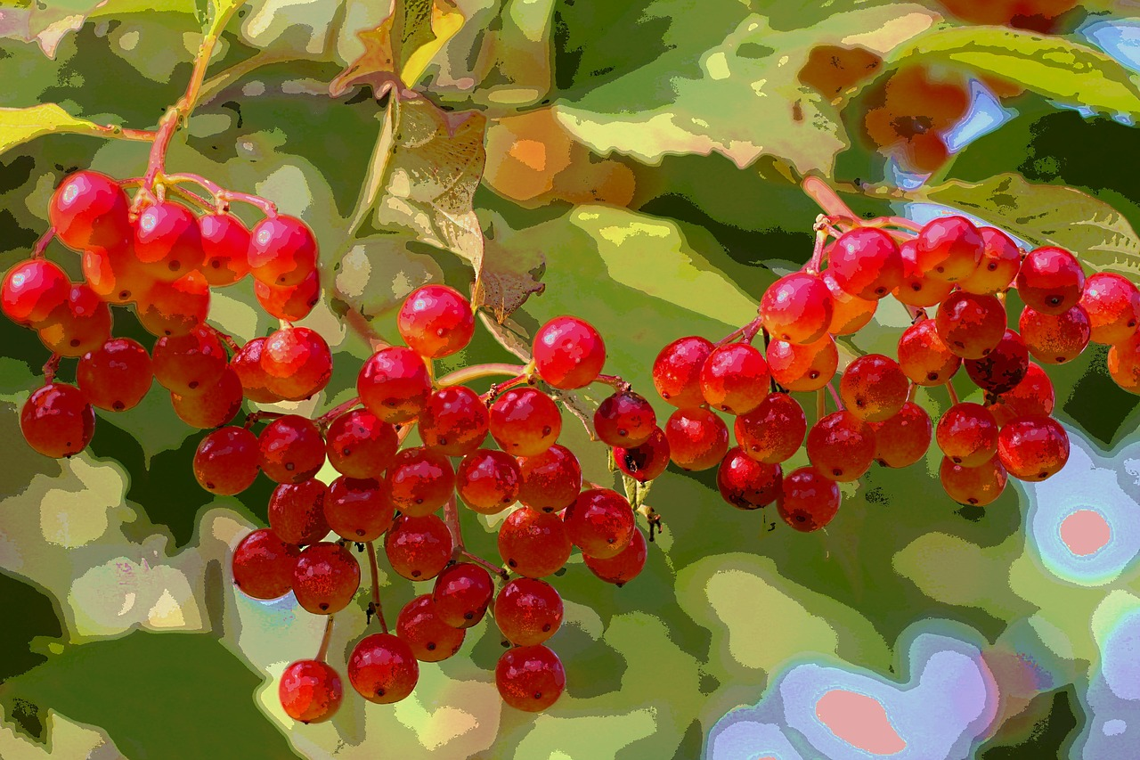 berries autumn color free photo
