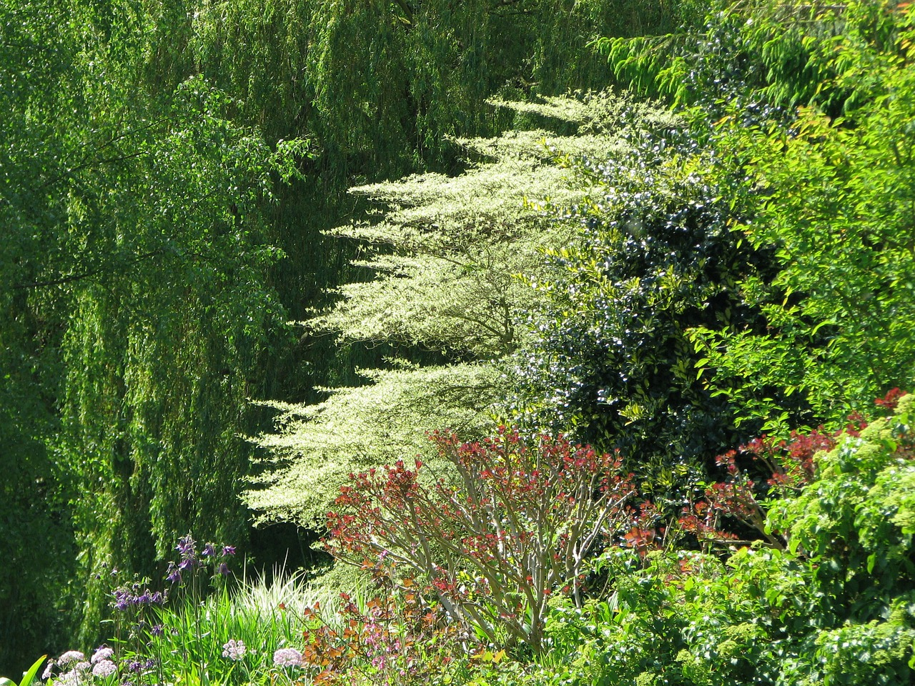 beth chatto gardens dogwood free photo