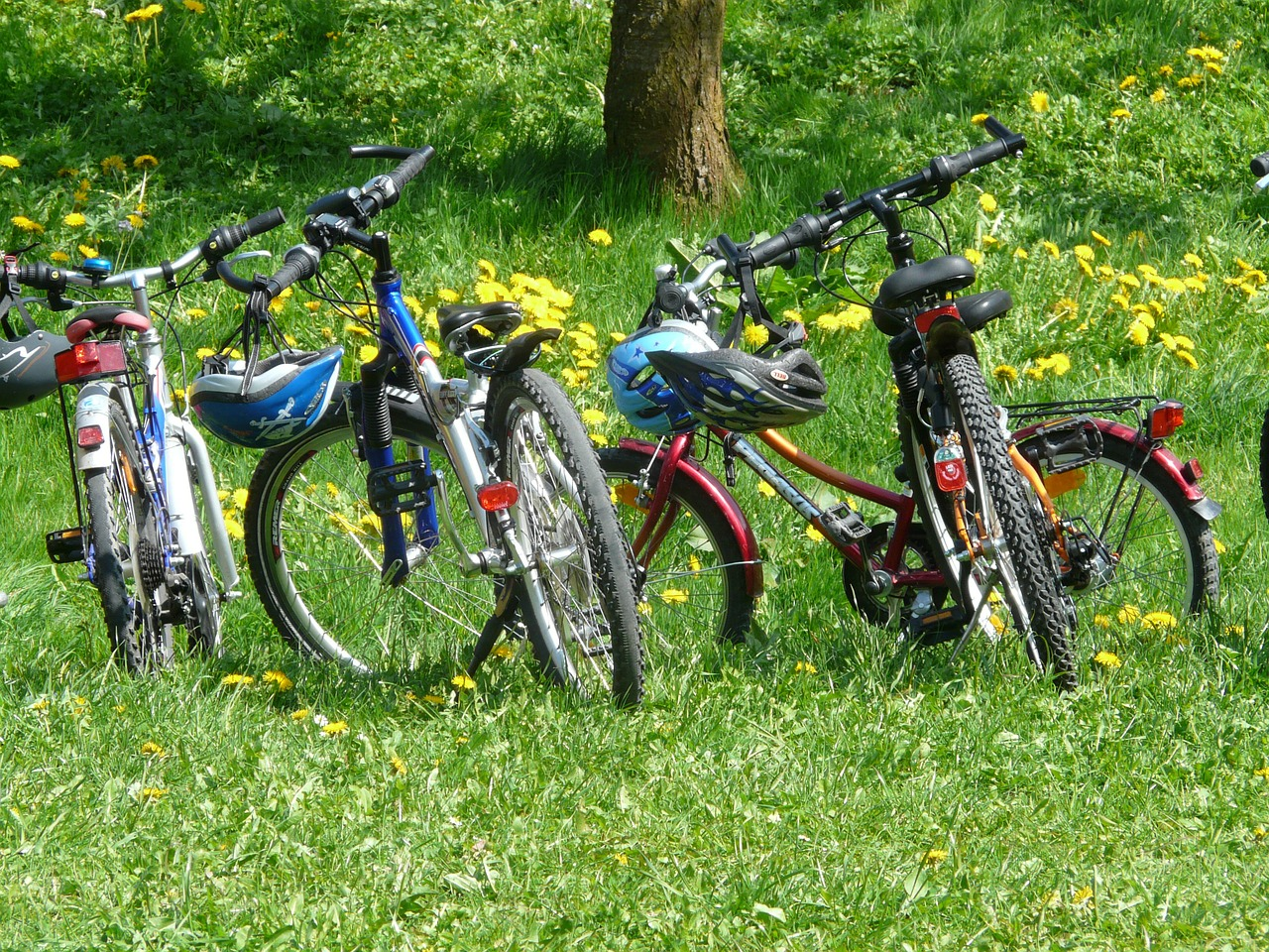 bicycles bike family outing free photo