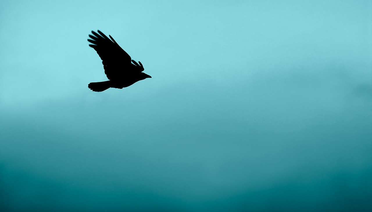 bird animal flying free picture