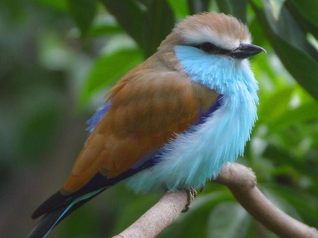 bird blue nature free picture