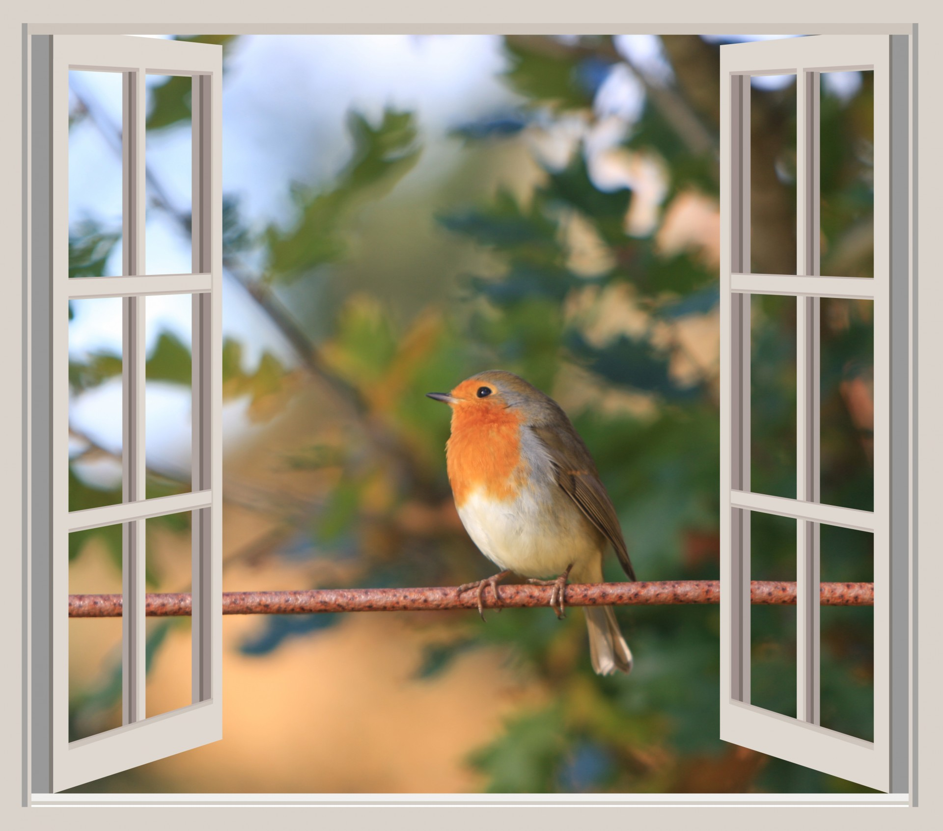 Bird Robin Window Frame Open Free Image From Needpix Com