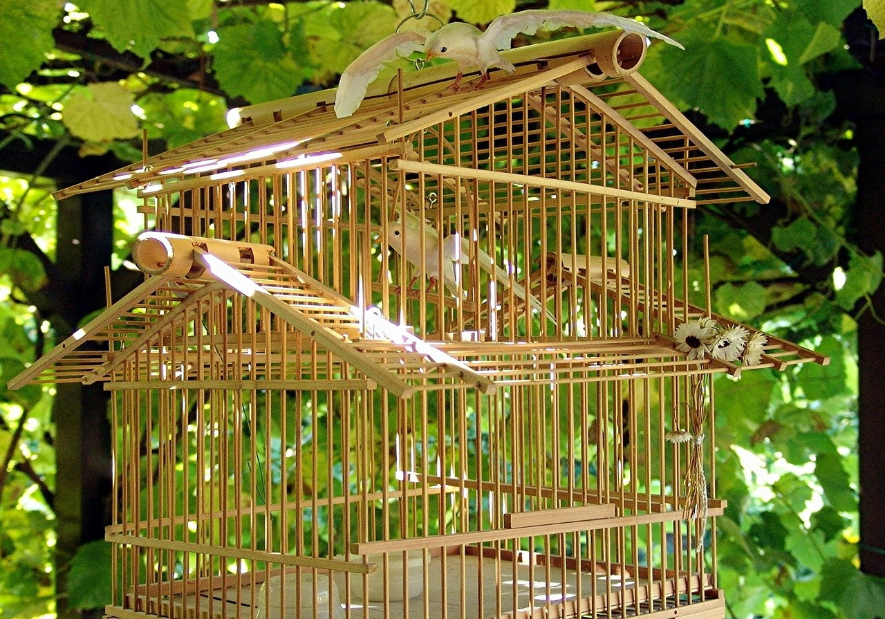 birdcage birds bamboo free photo
