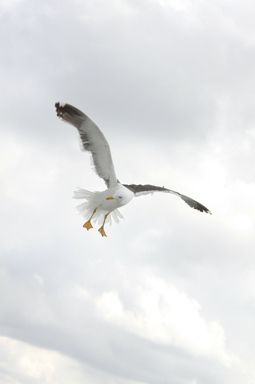 birds wings seagulls free photo