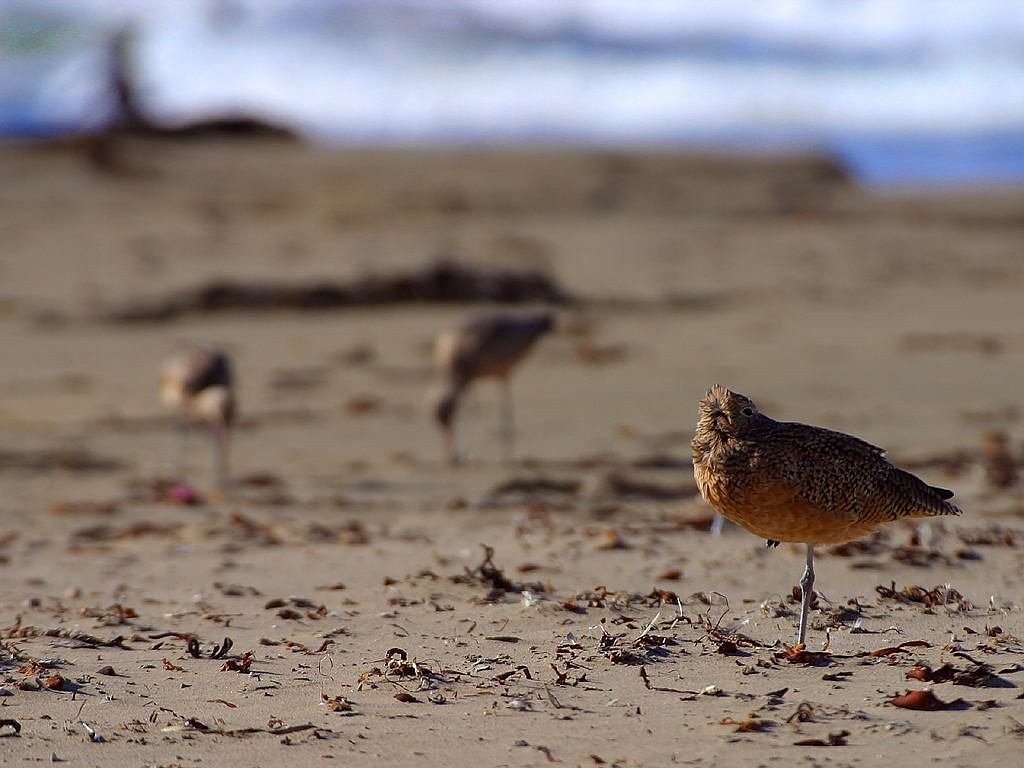 birds stand on one leg beach free picture