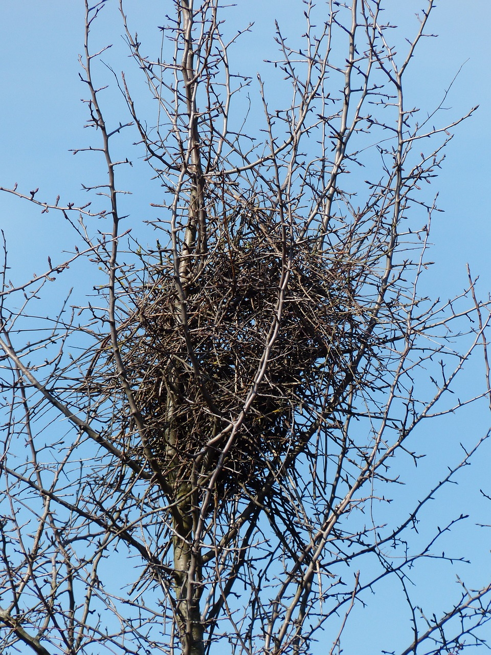 bird's nest nest tree free photo