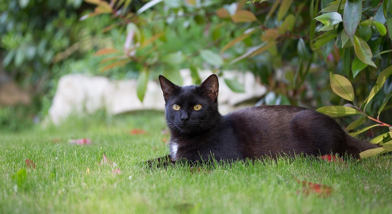 Blak puss www xlxx Vedio com