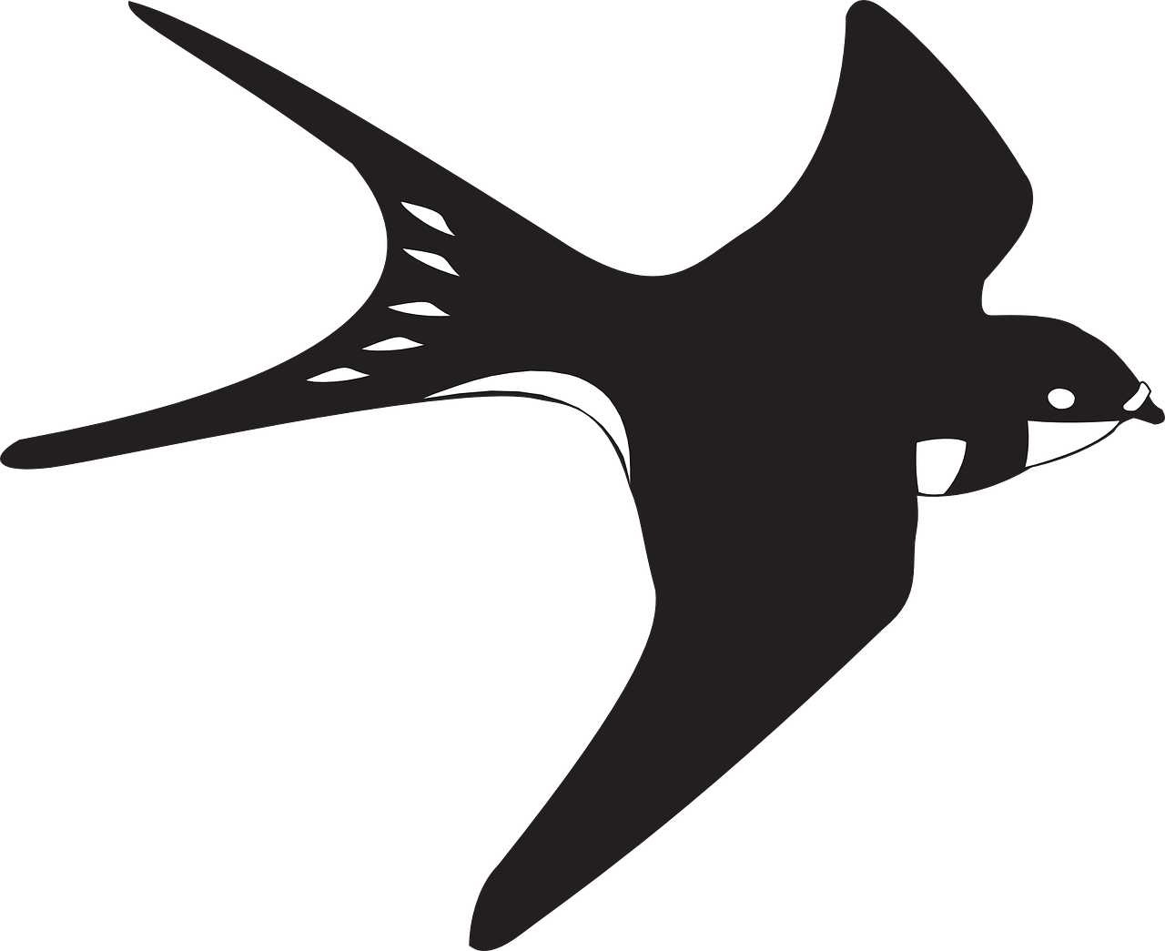black,white,bird,flying,wings,feathers,soaring,fly,swallow,free vector graphics,free pictures, free photos, free images, royalty free, free illustrations, public domain