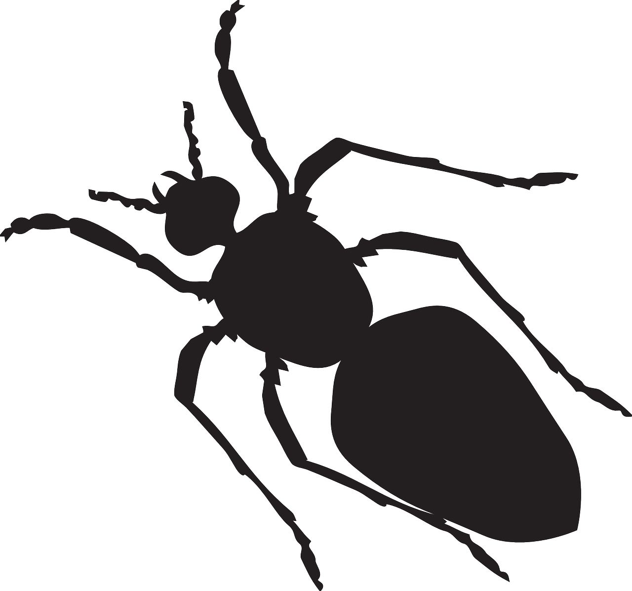 black silhouette ant free photo