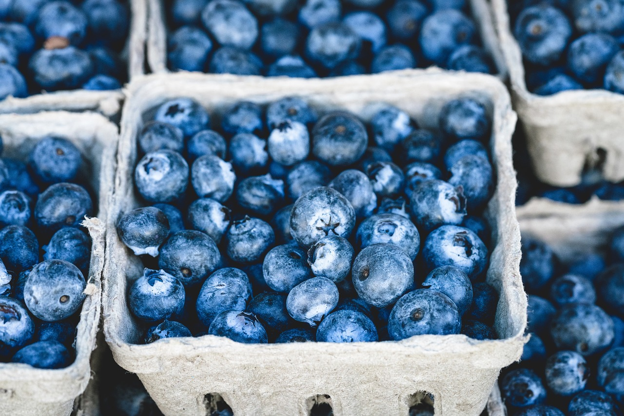 blue blueberry delicious free photo