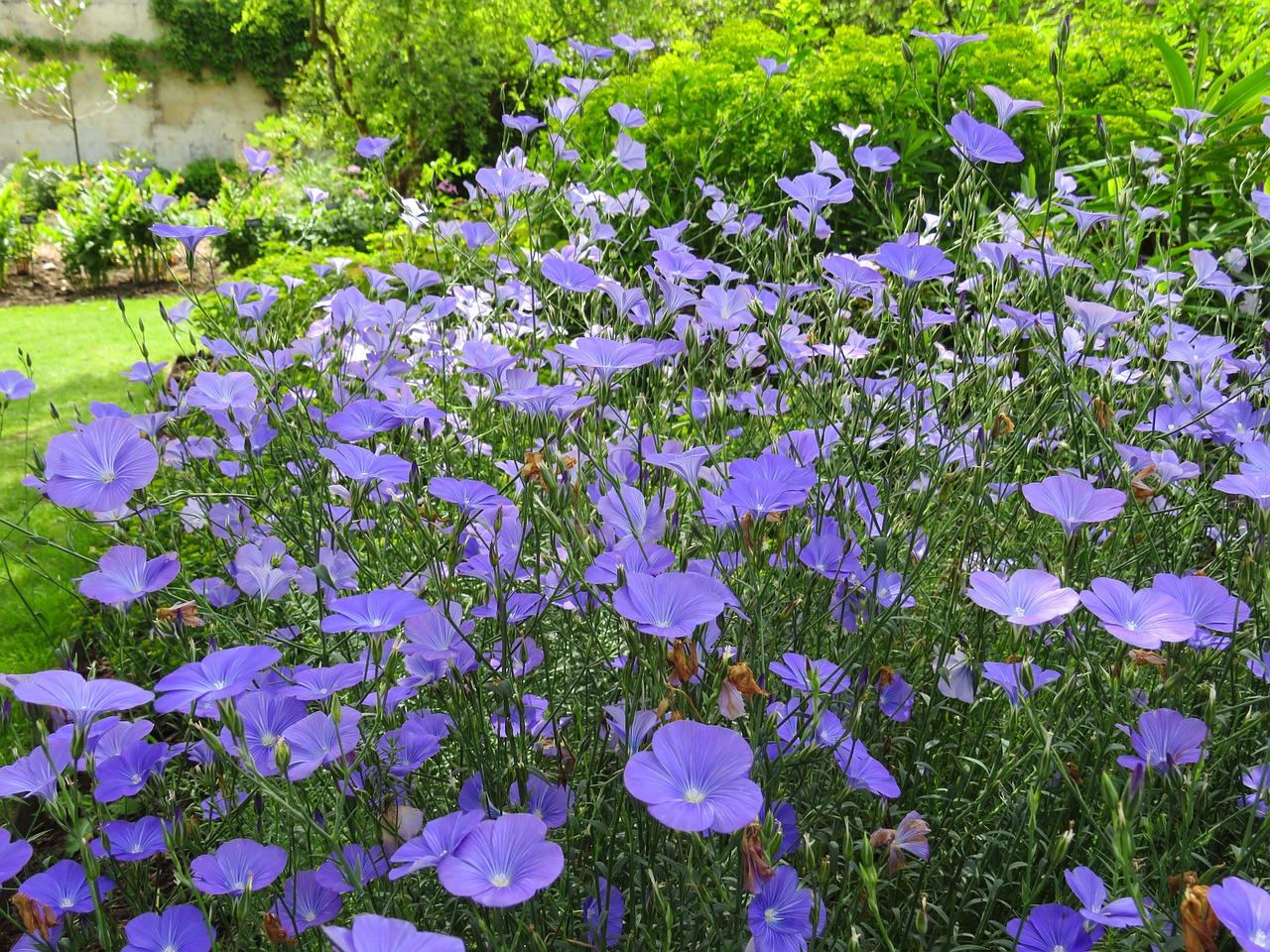 blueflowersgardenenglishsummerfloral - English Flowers Garden