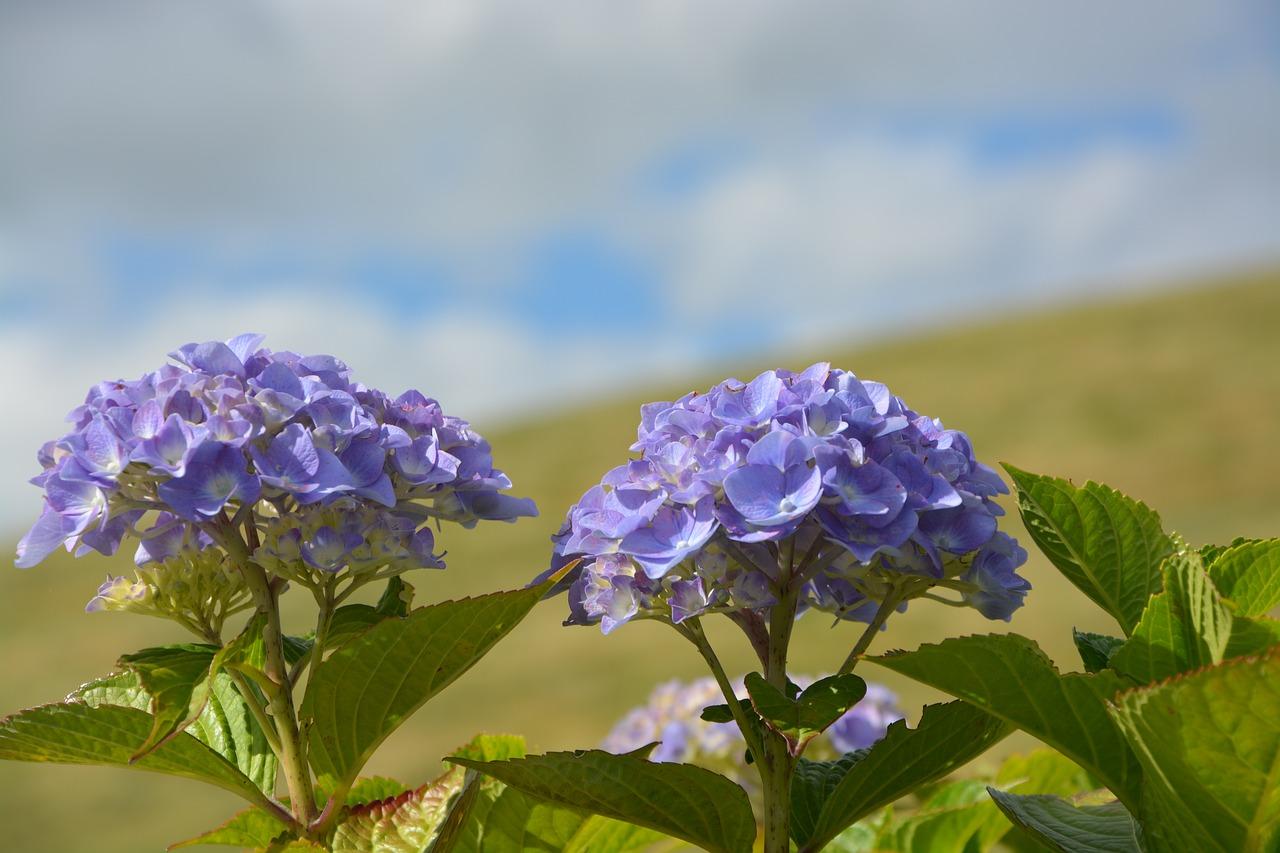 Blue Flowerssummersummer Flowersnaturepetals Free Photo From
