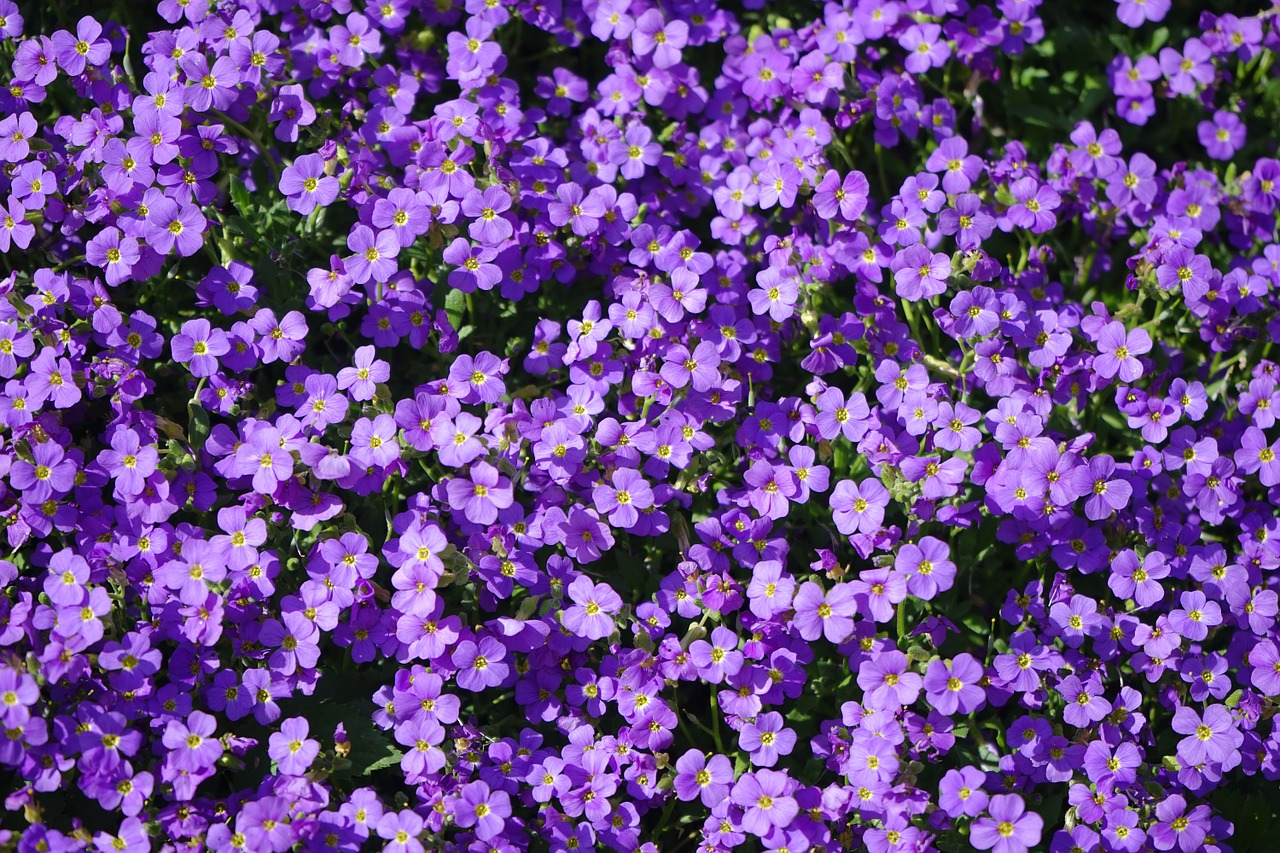blue pillow flowers violet free photo