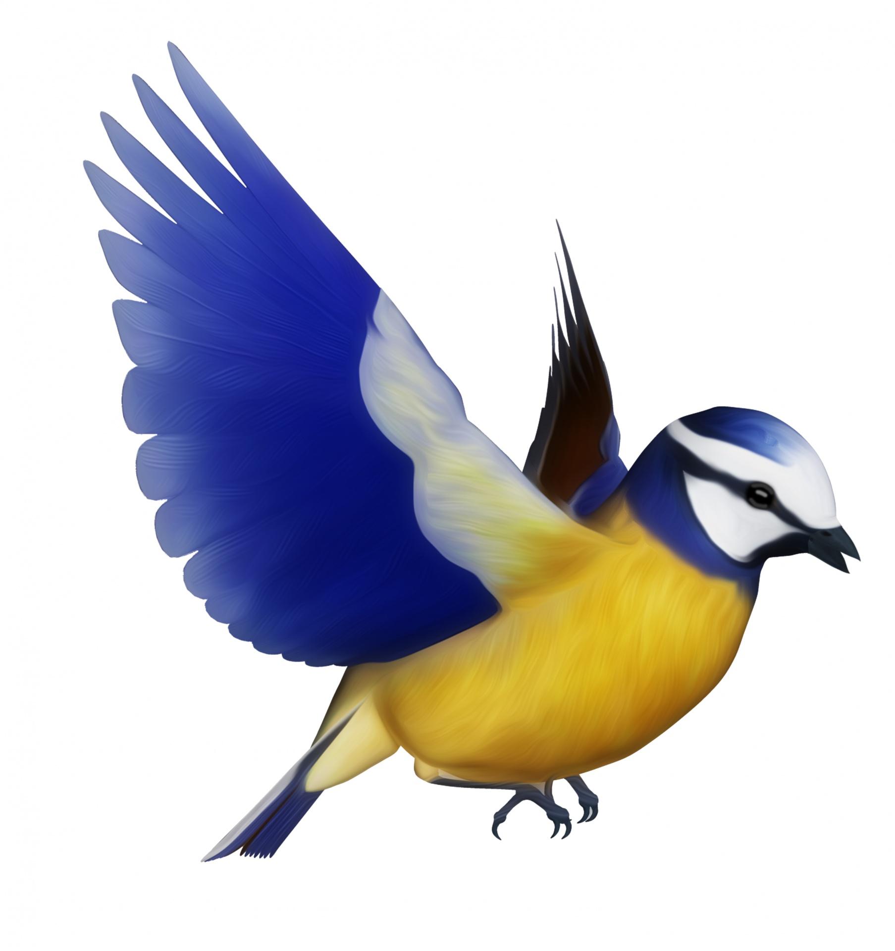 Blue tit bird clipart,bird,birds,clipart,commercial use