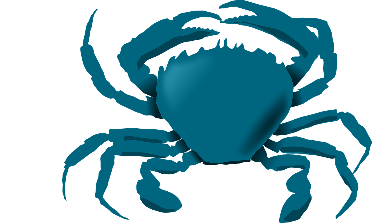 bluecrab crab maryland free photo