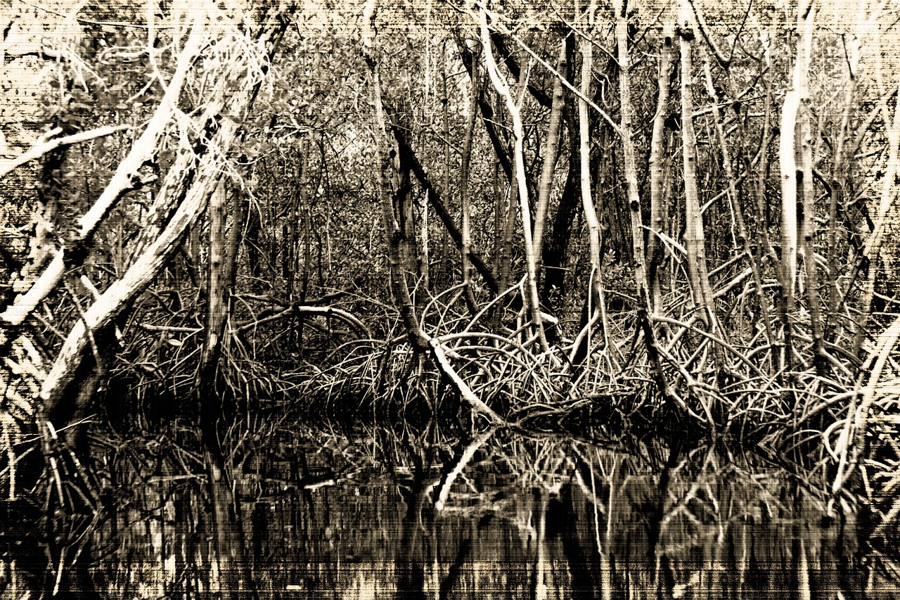 bogs southern states black and white free photo