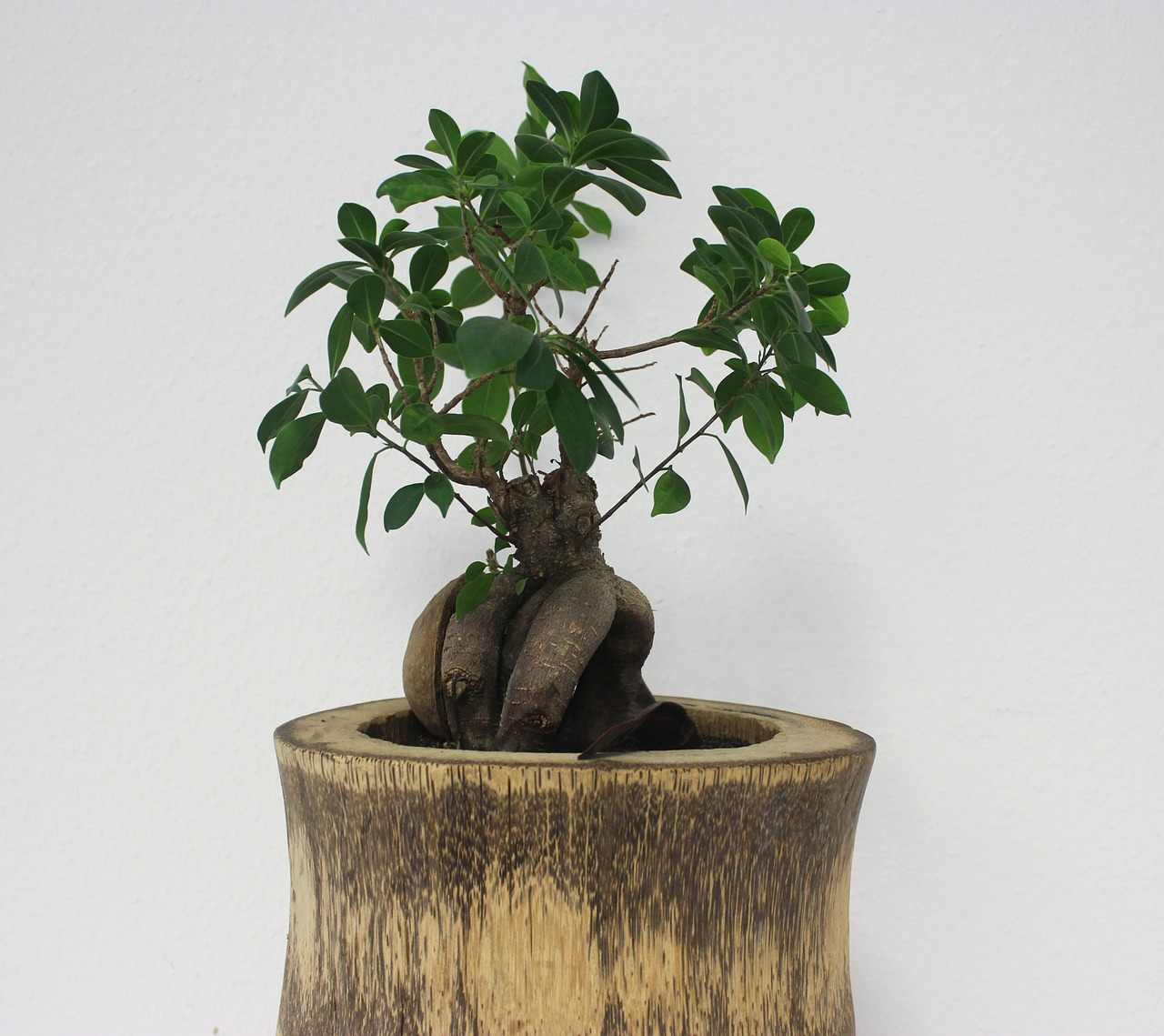 Download Free Photo Of Bonsai Tree Office Green Plant From Needpix Com