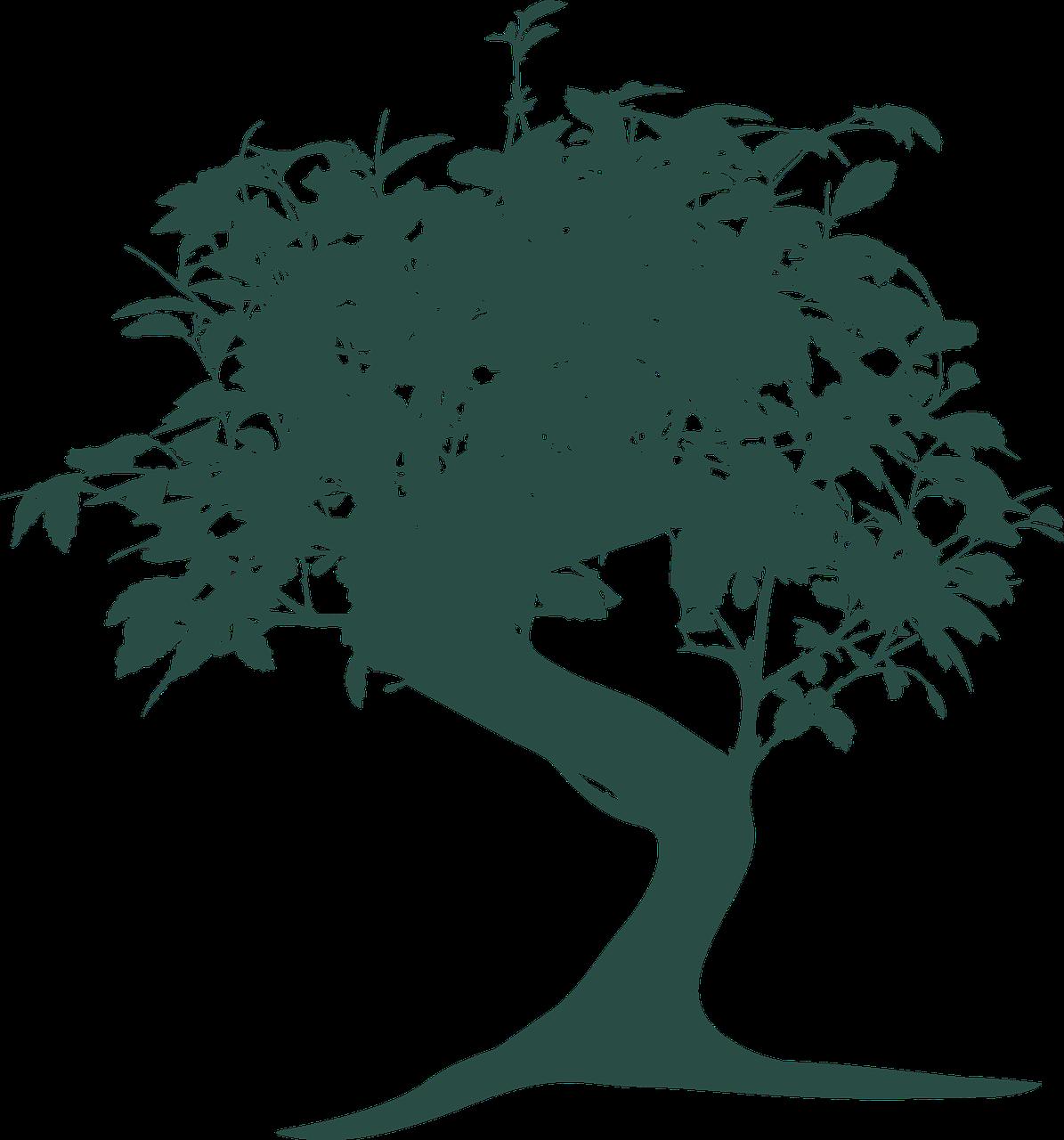 Bonsai Tree Nature Oriental Gardening Free Image From Needpix Com