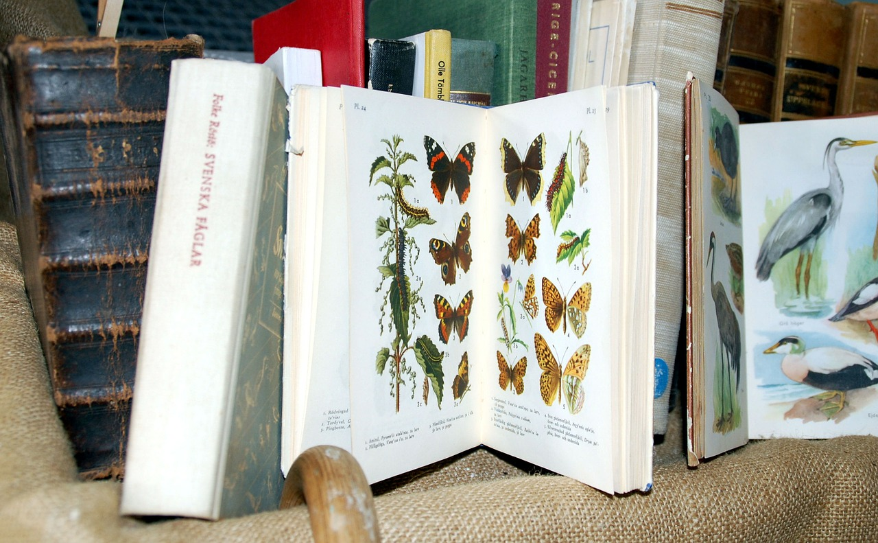 books butterflies birds free photo