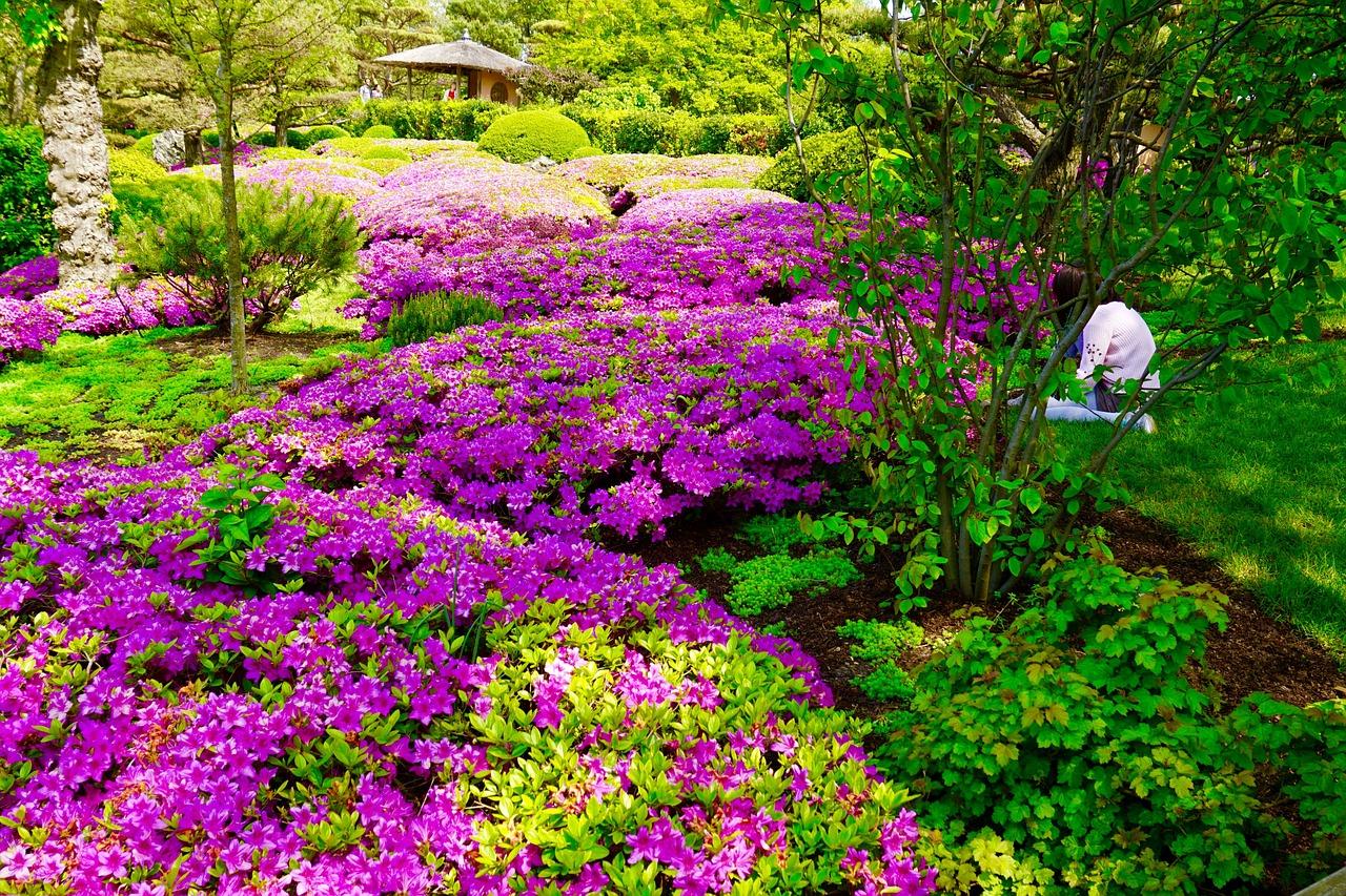 Botanic Garden Japanese Garden Landscape Rhododendron Pink Free