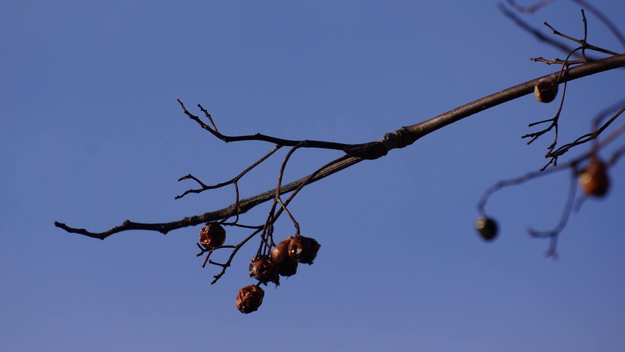 branch bird food leafless free photo