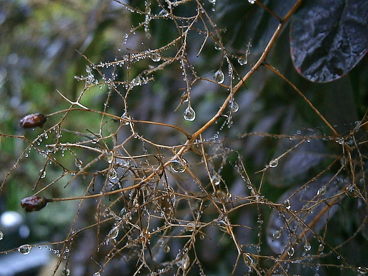 branches aesthetic raindrop free photo