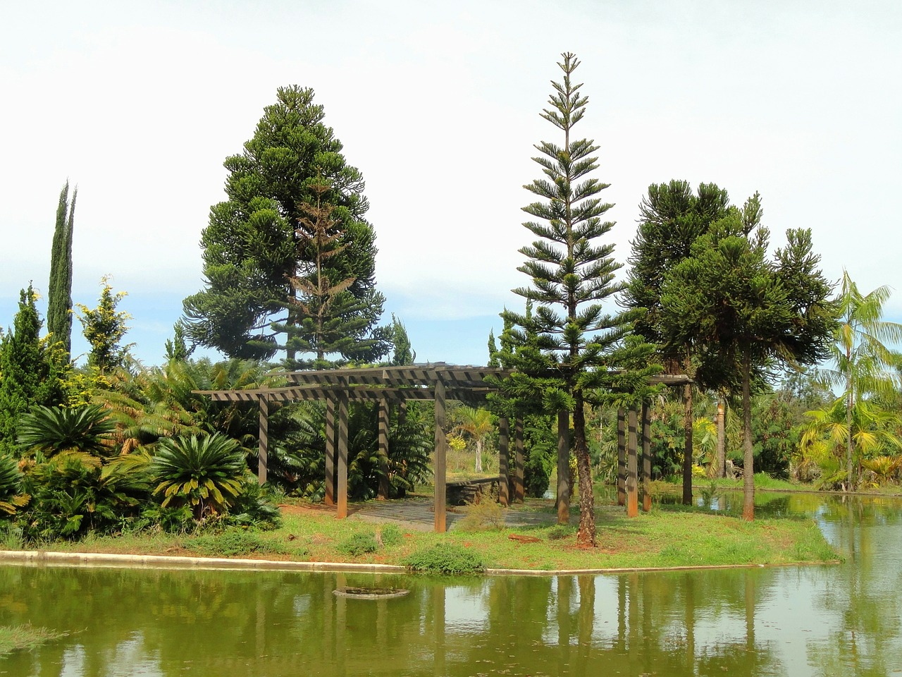 brasilia brazil botanical garden free photo