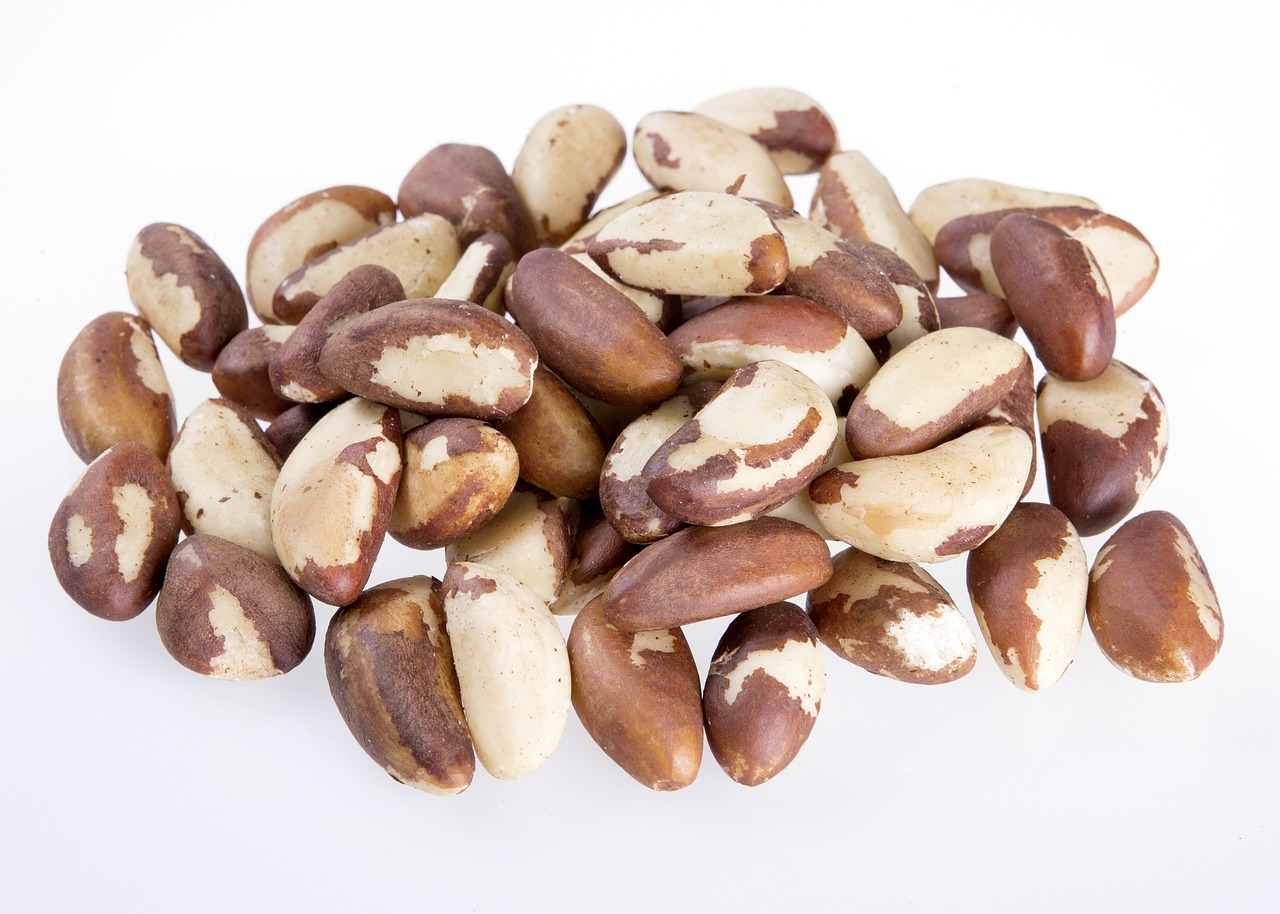 brazil nut seeds natural nuts eat free photo