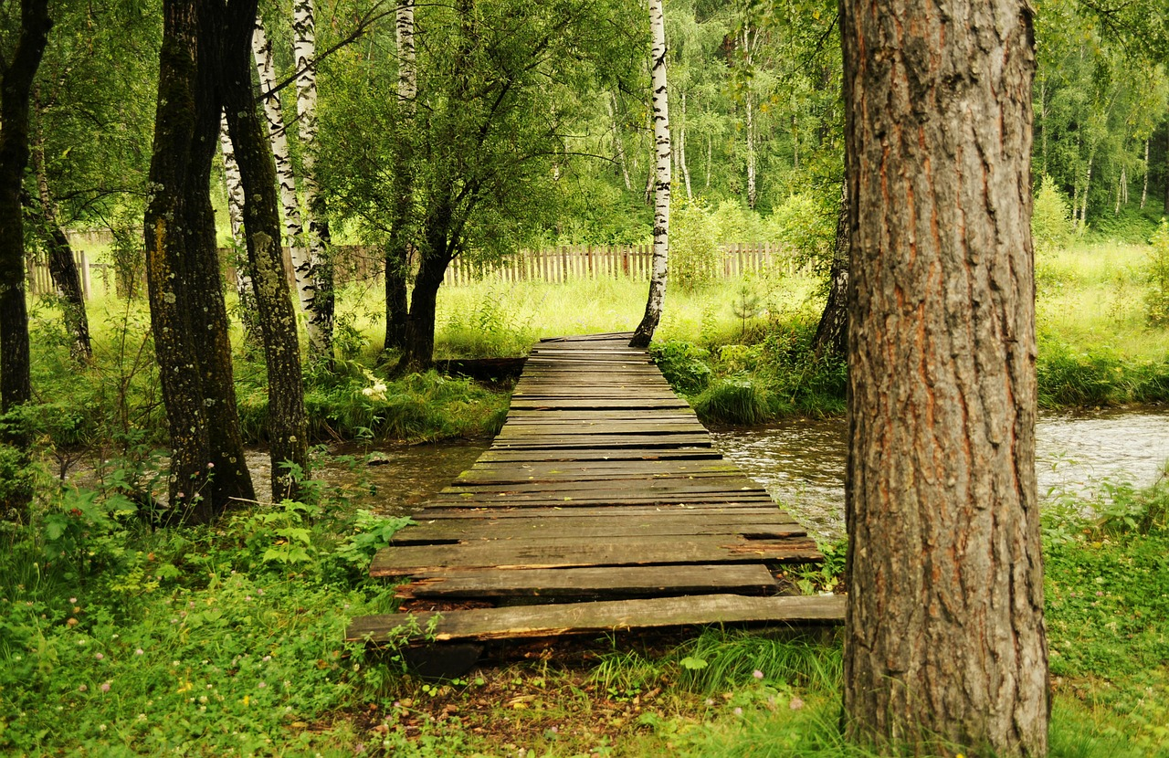 bridge wooden woods free photo