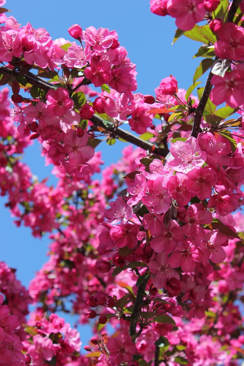 Brightpinkflowernaturenatural free photo from needpix bright pink flower mightylinksfo