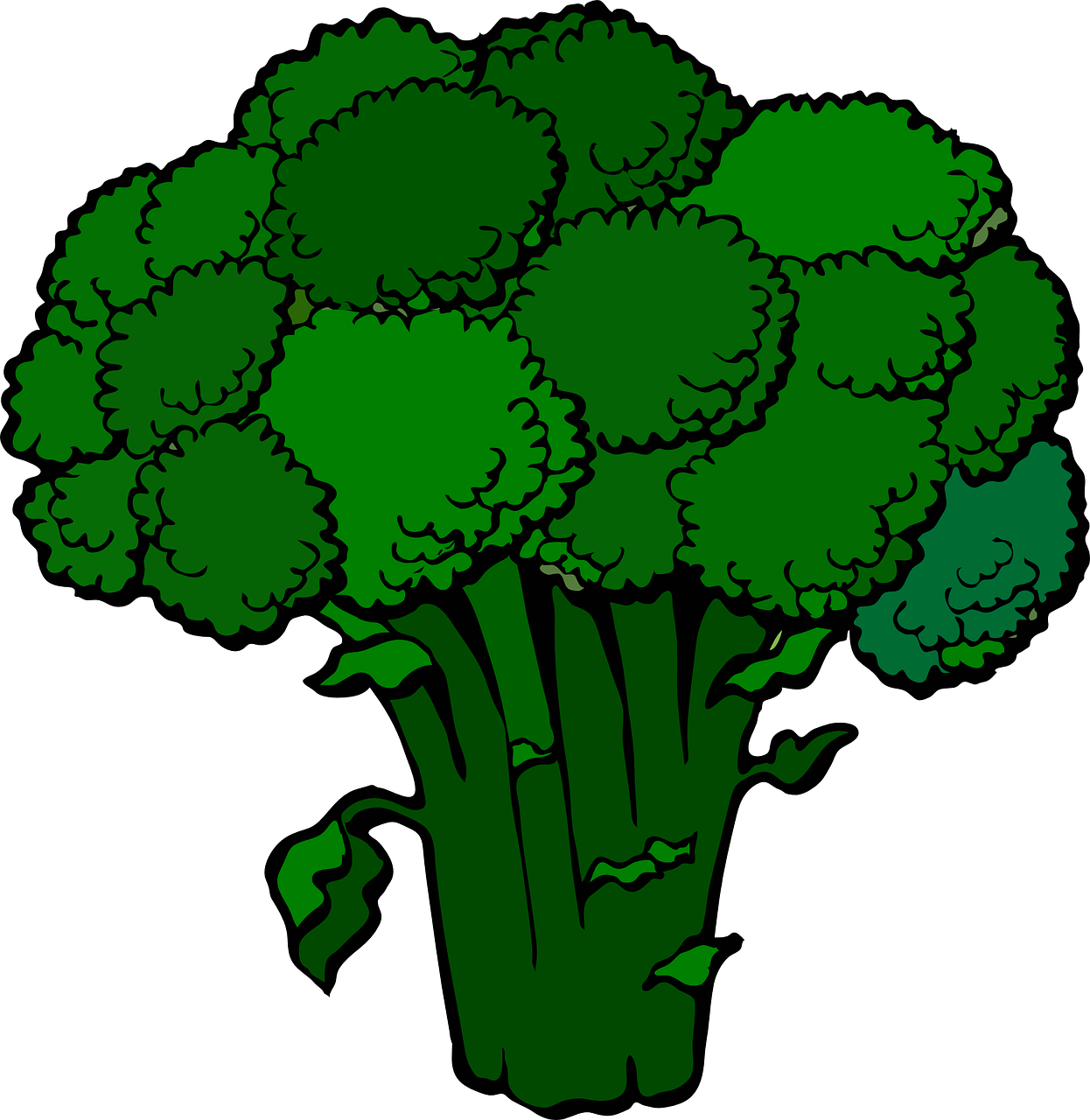 broccoli green fresh free photo