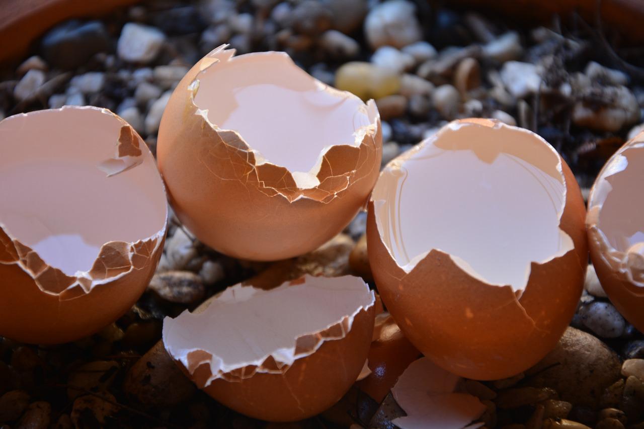 Broken eggs,calcium,shells,free pictures, free photos - free image ...